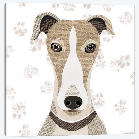 Greyhound Canvas Print #SIH89} by Simon Hart Canvas Print