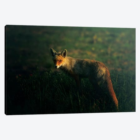 Mr.Fox Canvas Print #SIP1} by Sina Pezeshki Canvas Wall Art