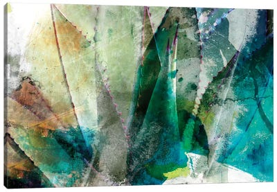 Agave Abstract II Canvas Art Print
