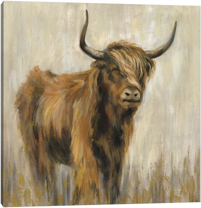 Highland Mountain Cow Canvas Art Print