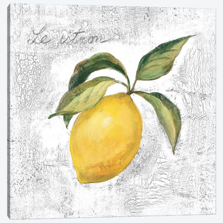Le Citron on White Canvas Print #SIV108} by Silvia Vassileva Canvas Print