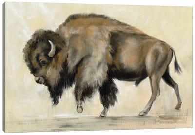 Bronze Buffalo Canvas Art Print