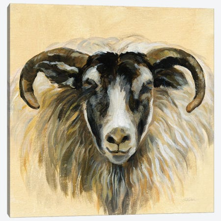 Highland Animal Ram Canvas Print #SIV125} by Silvia Vassileva Canvas Art