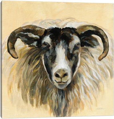 Highland Animal Ram Canvas Art Print