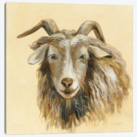 Highland Animal Sheep Canvas Print #SIV126} by Silvia Vassileva Canvas Art