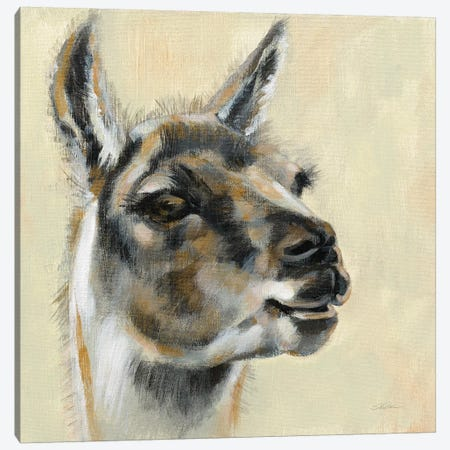 Llama Portrait Canvas Print #SIV129} by Silvia Vassileva Canvas Art Print