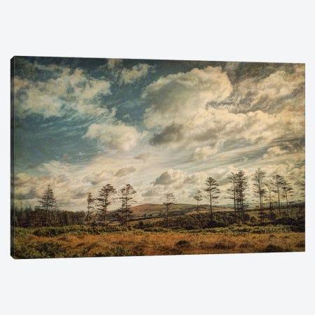 Dartmoor In Summer Canvas Print #SJR15} by Sarah Jarrett Canvas Print