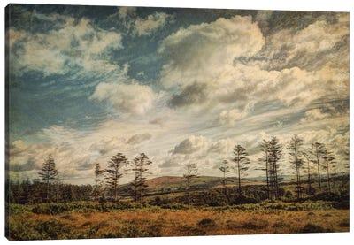 Dartmoor In Summer Canvas Art Print