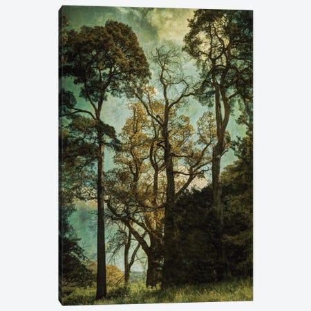 Early Summer I Canvas Print #SJR16} by Sarah Jarrett Canvas Art Print