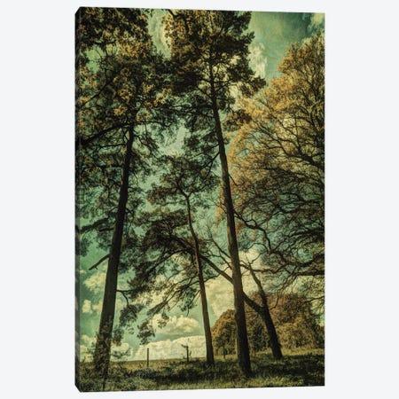 Early Summer II Canvas Print #SJR17} by Sarah Jarrett Art Print