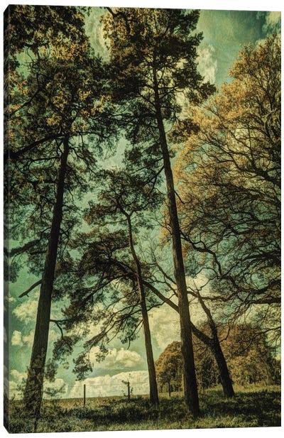 Early Summer II Canvas Art Print