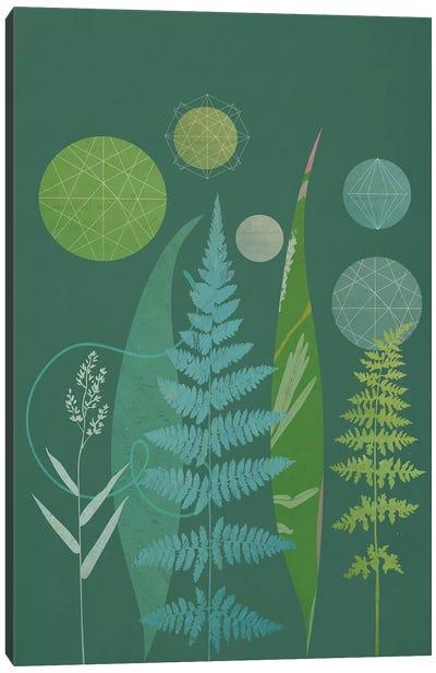 Ferns Canvas Art Print