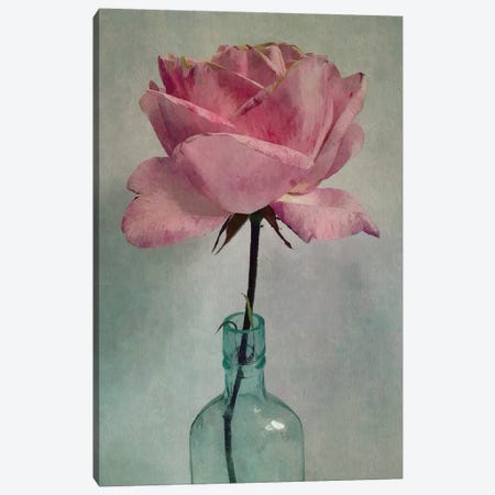 A Single Rose Canvas Print #SJR1} by Sarah Jarrett Art Print