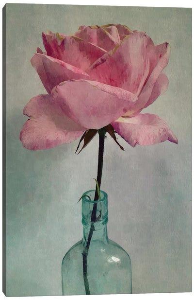 A Single Rose Canvas Art Print