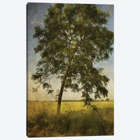 Across The Fields Canvas Print #SJR2} by Sarah Jarrett Art Print