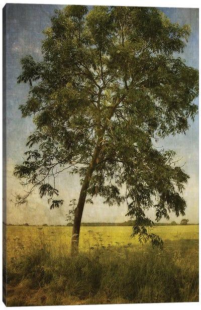 Across The Fields Canvas Art Print