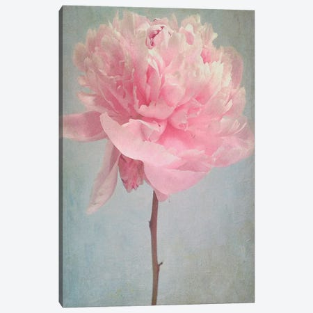 Peony Canvas Print #SJR44} by Sarah Jarrett Canvas Artwork