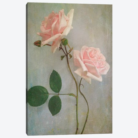 Pink Roses Canvas Print #SJR46} by Sarah Jarrett Canvas Artwork