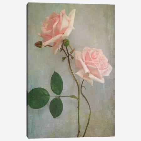Pink Roses Canvas Print #SJR46} by Sarah Jarrett Canvas Artwork