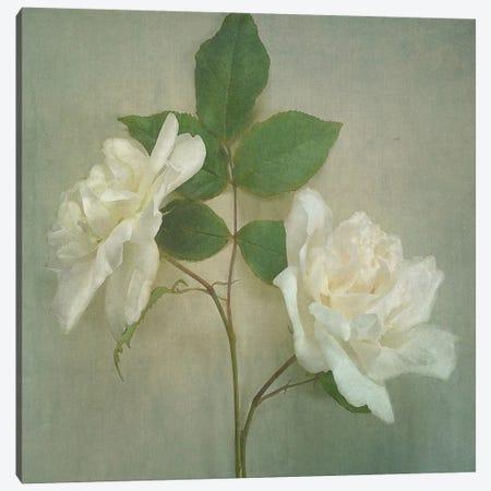 Roses Canvas Print #SJR51} by Sarah Jarrett Canvas Artwork