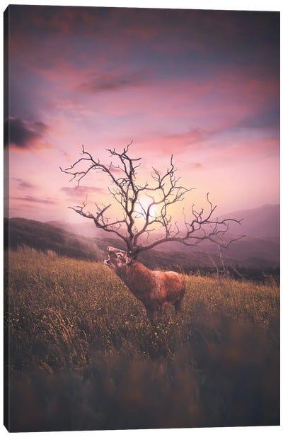 Deer Has Horn Canvas Art Print
