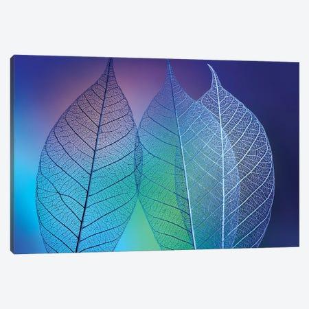 Prismatic leafs 3-Piece Canvas #SKO2} by Shihya Kowatari Canvas Artwork