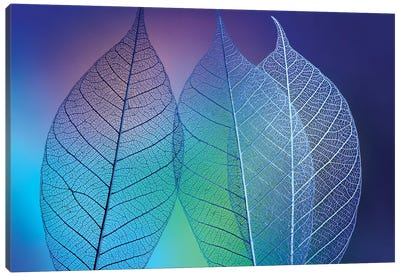 Prismatic leafs Canvas Art Print