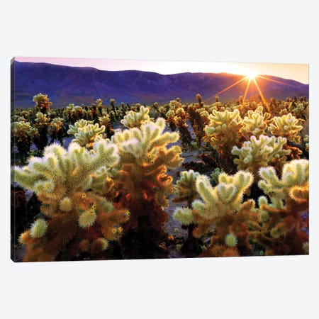 Joshua Tree National Park I Canvas Print #SKR111} by Susanne Kremer Art Print