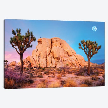 Joshua Tree National Park II Canvas Print #SKR112} by Susanne Kremer Canvas Print