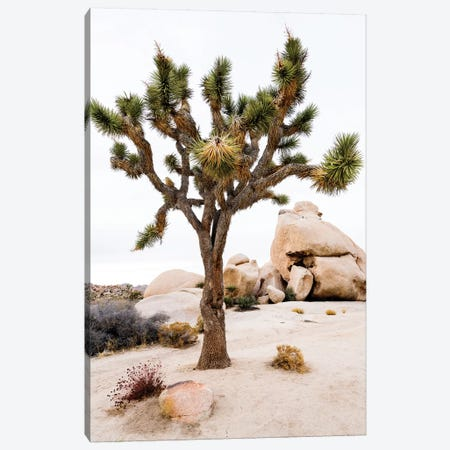 Joshua Tree National Park III Canvas Print #SKR113} by Susanne Kremer Canvas Print