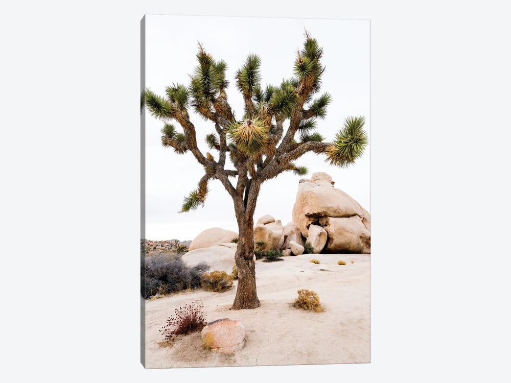 Joshua Tree National Park III by Susanne Kremer 1-piece Canvas Wall Art