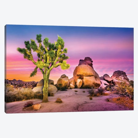 Joshua Tree National Park IV Canvas Print #SKR114} by Susanne Kremer Canvas Wall Art