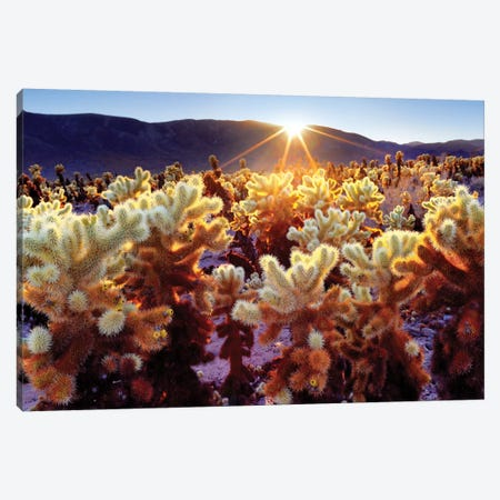 Joshua Tree National Park V Canvas Print #SKR115} by Susanne Kremer Canvas Artwork