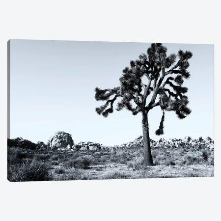 joshua Tree National Park VI Canvas Print #SKR116} by Susanne Kremer Canvas Art