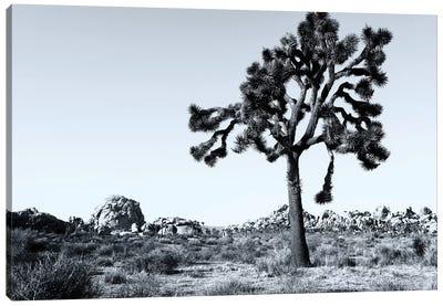 joshua Tree National Park VI Canvas Art Print