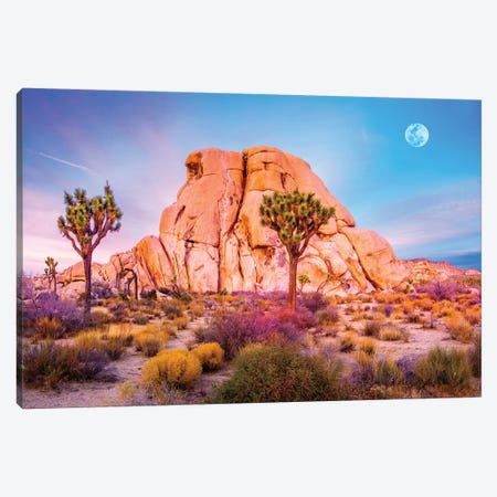 Joshua Tree National Park VIII Canvas Print #SKR118} by Susanne Kremer Art Print