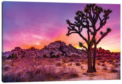 Joshua Tree National Park IX Canvas Art Print