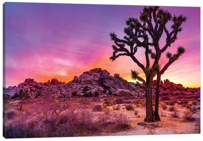 Joshua Tree National Park IX Canvas Art Print