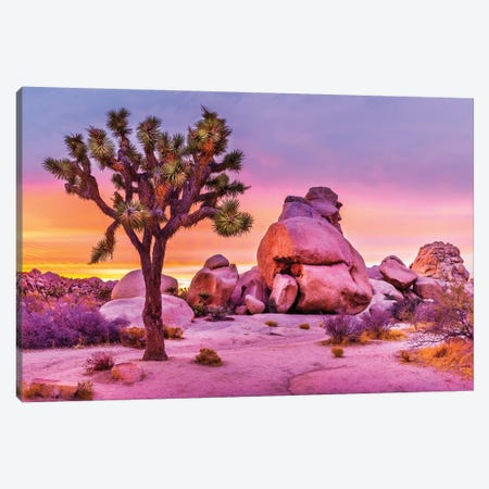 Joshua Tree National Park X Canvas Print #SKR120} by Susanne Kremer Canvas Art