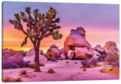 Joshua Tree National Park X Canvas Art Print