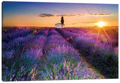 Plateau de Valensole Lavender Field Sunrise I Canvas Art Print