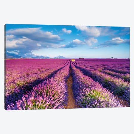 Plateau de Valensole Provence Lavender Field IV Canvas Print #SKR180} by Susanne Kremer Canvas Wall Art
