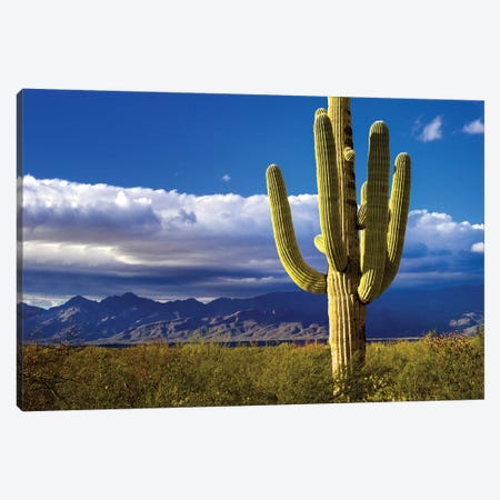 Saguaro Nationla Park East  Canvas Print #SKR206} by Susanne Kremer Canvas Wall Art