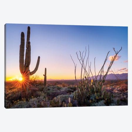 Sunset Saguaro National Park East I Canvas Print #SKR235} by Susanne Kremer Canvas Print
