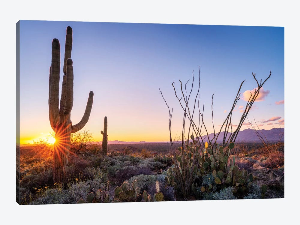 Sunset Saguaro National Park East I by Susanne Kremer 1-piece Canvas Wall Art