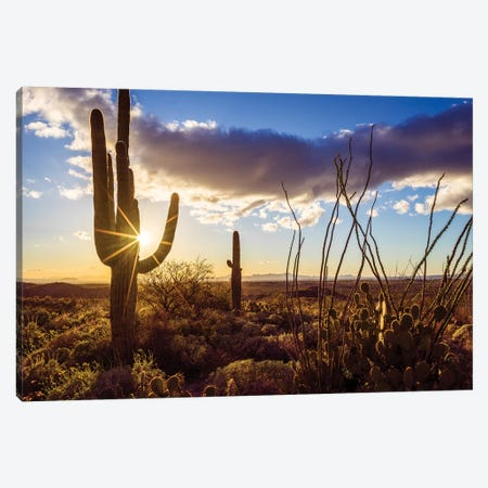 Sunset Saguaro National Park East II Canvas Print #SKR236} by Susanne Kremer Canvas Art Print