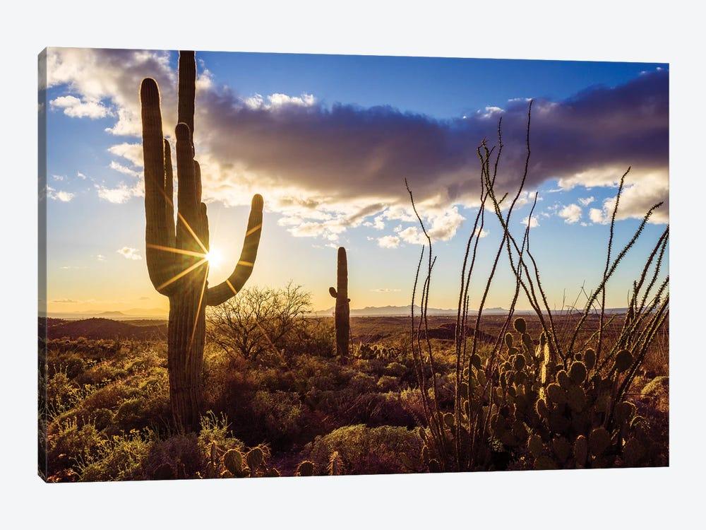 Sunset Saguaro National Park East II by Susanne Kremer 1-piece Canvas Print