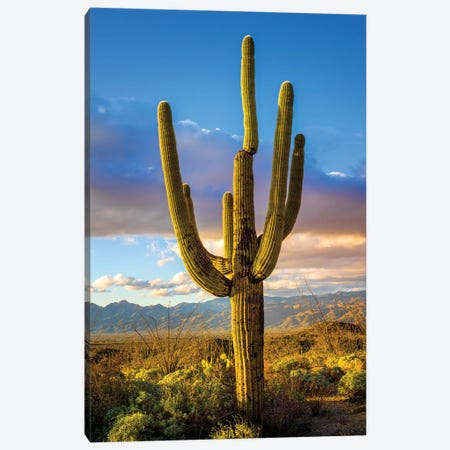 Sunset Saguaro National Park East III Canvas Print #SKR237} by Susanne Kremer Canvas Art Print