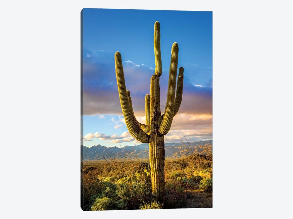 Sunset Saguaro National Park East III by Susanne Kremer 1-piece Canvas Art