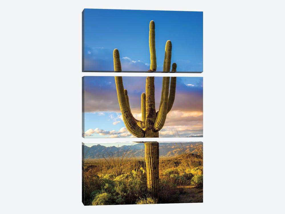 Sunset Saguaro National Park East III by Susanne Kremer 3-piece Canvas Artwork